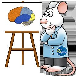 Brain mouse